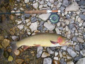 snake-river-cutthroat