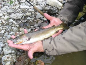Teton River 9-25-13