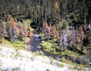 robinson creek3